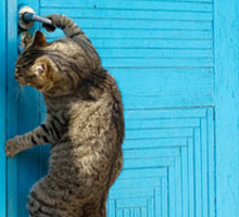 Masterpet-Cat-Door-Training-220x200.jpg