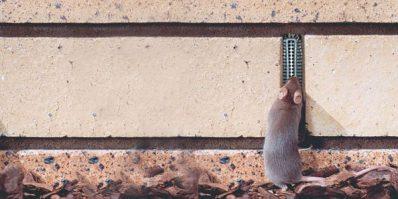 Weepa-Protector-mouse-crop-600x300.jpg